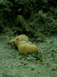 El pikachu salvaje fue envenenado por aguas contaminadas y queda fuera de combate!