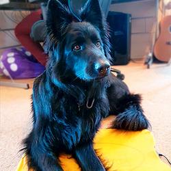 Labrador mix Pet-Mat Heated Animal Pad