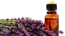 Benefits of Lavender Essential Oil