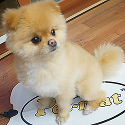 Pomeranian Pet-Mat Heated Animal Pad