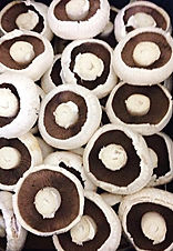 white brown flat mushrooms