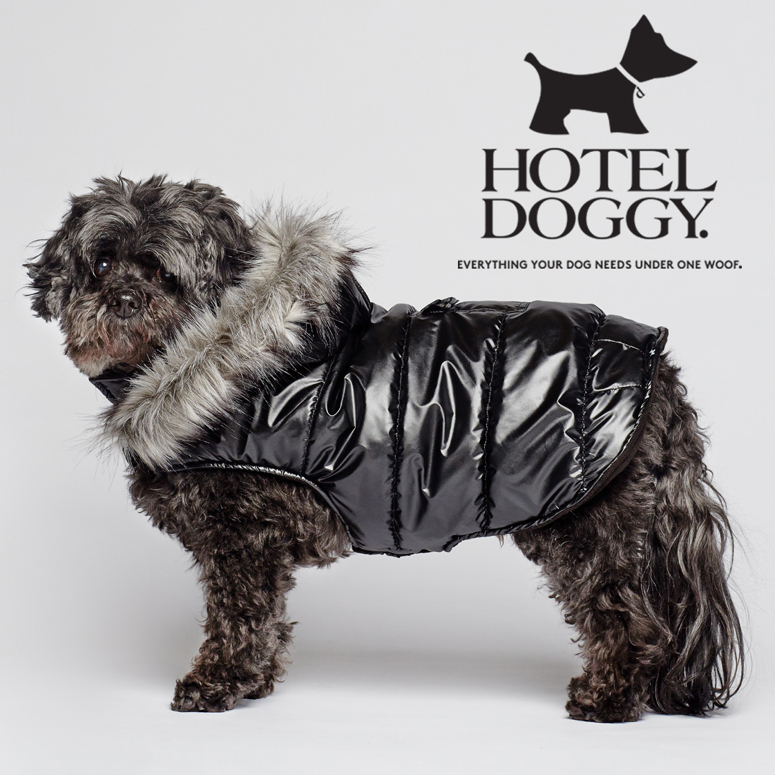 Hotel-Doggy square