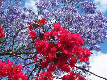 Two Poems // Carla Sofia Ferreira