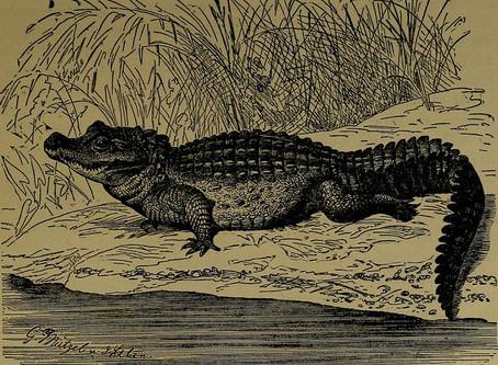 Keynesian Crocodile // Sithuraj Ponraj
