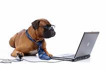 Art.12-chien-dressage-ordinateur.jpg