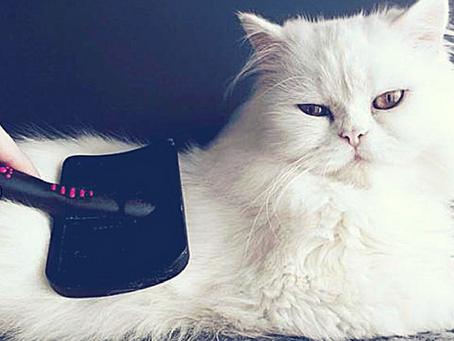 Le toilettage du chat, conseils pour bien entretenir votre félin ;)