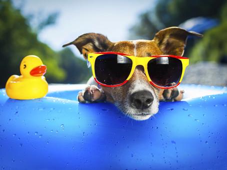 Chaleur estivale, les bons gestes à adopter pour des vacances au top !