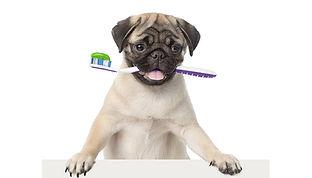 dentition-chien.jpg