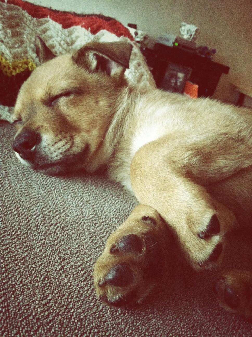 adopt-a-dog-born-to-be-a-bride