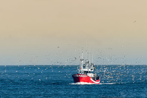 Fishing boat returning with lots of seag