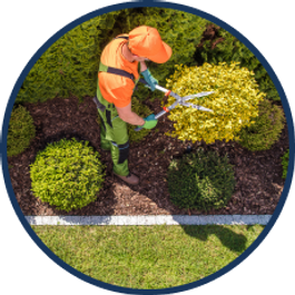 a person is using shears to prune a shrub
