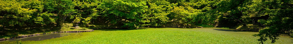 a landscape with lush green grass surrounded by beautiful trees