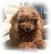 ペット介護 老犬介護