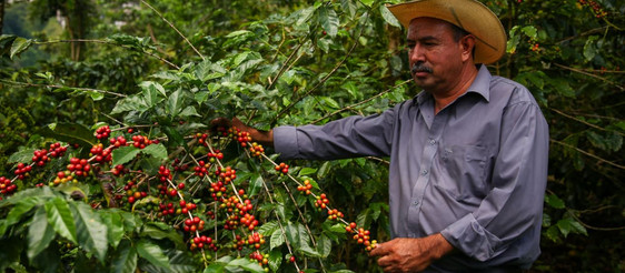 Can you lend Starbucks $500 million? Coffee giant issues world's first Sustainability Bond