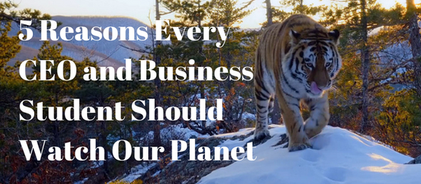 5 Reasons Every CEO and Business Student Should Watch OUR PLANET