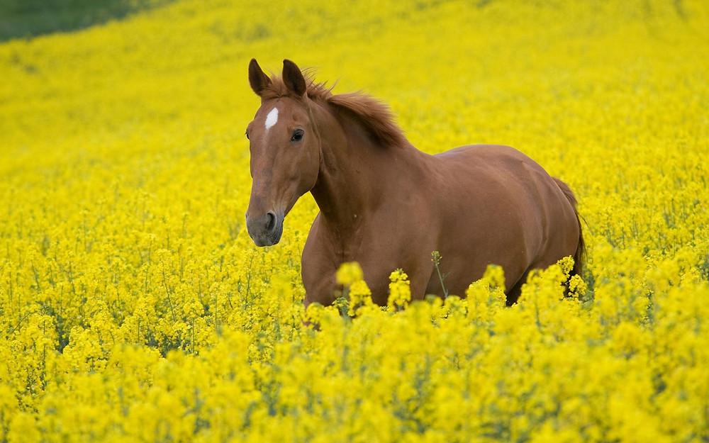 koňské zdraví