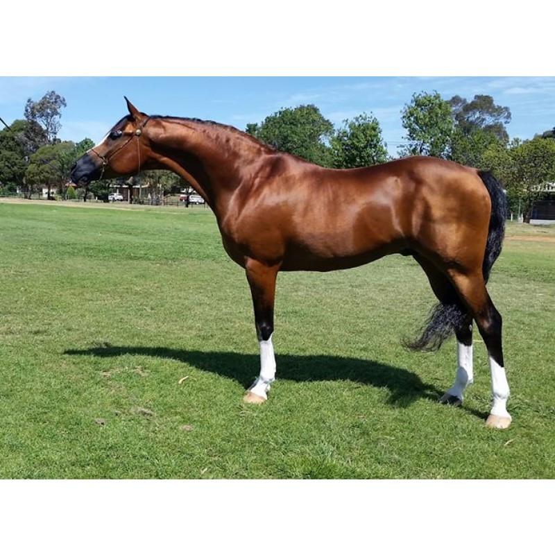 Zdravý kůň