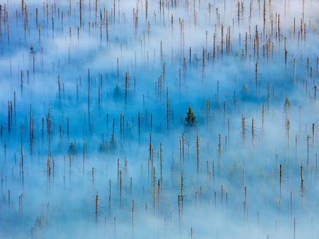 ¿Conoces las mejores fotografías de naturaleza y vida silvestre en Europa este 2020? ⛰️🏜️