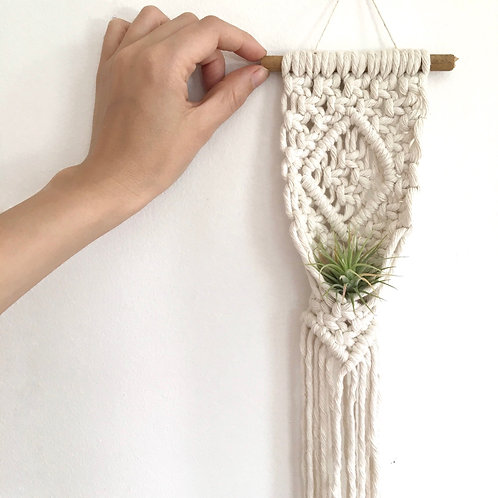 air plant home | small