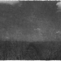 Everglades 09