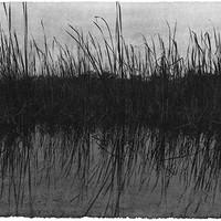 Everglades 10
