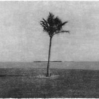 Everglades 08