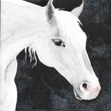 """_Sterling__Watercolor_6_ x 6""""_Daniel Smi"""