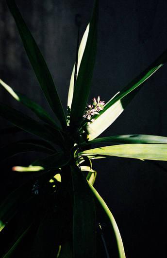 Plant in the shadow.  Sangubashi.