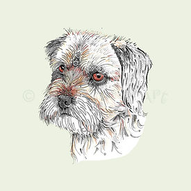 6 x Border Terrier pale blue [389]