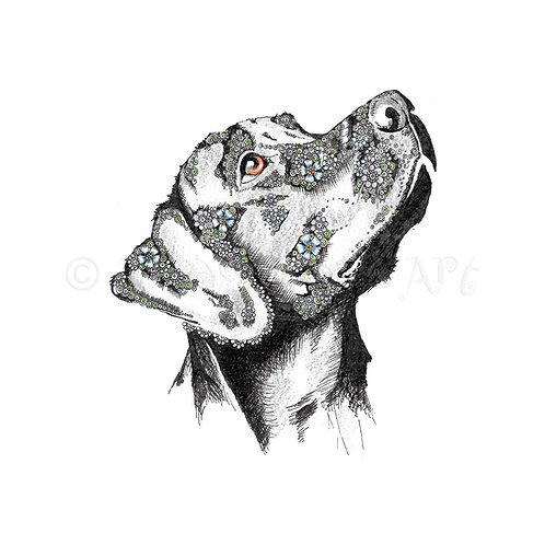 6 x Black Labrador [336]