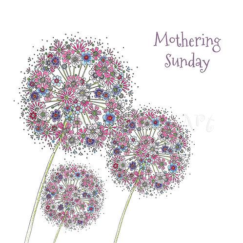 6 x Mothering Sunday Alliums [181]