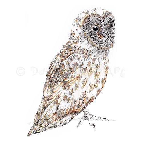 Barn Owl [018]