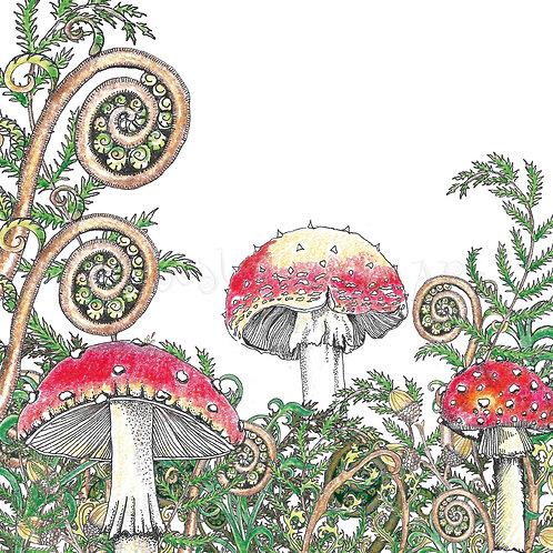 Woodland Fungi white [546]