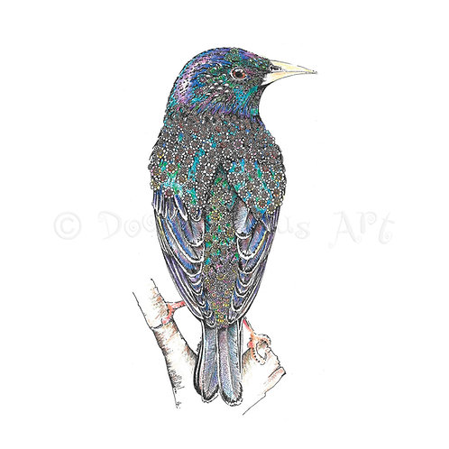 Starling [558]