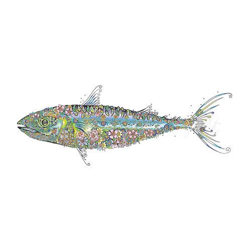 6 x Large Mackerel [165]