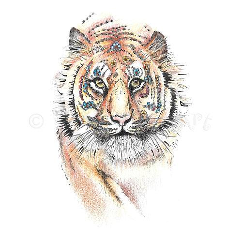 6 x Bengal Tiger [386]