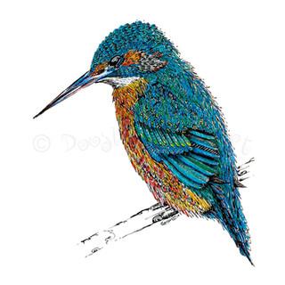 014 Kingfisher.jpg