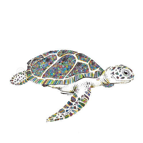 6 x Tropical Turtle [035]