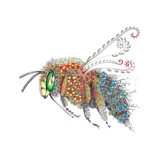 364 Blue-banded Bee.jpg