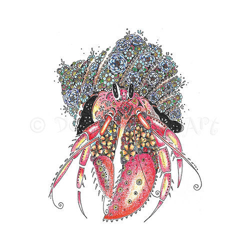 6 x Hermit Crab [482]
