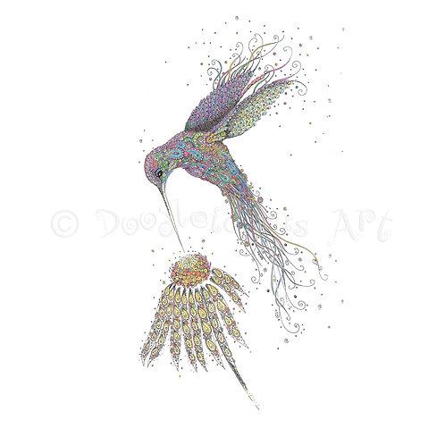 Iridescent Hummingbird [041]