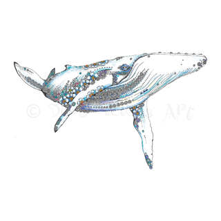 359 Blue Whale.jpg