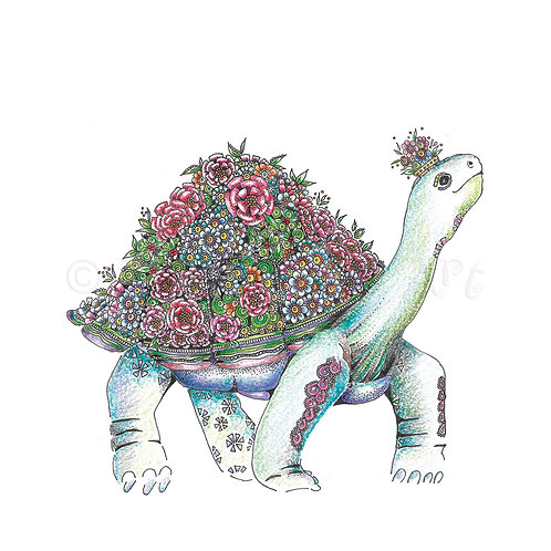 6 x Tortoise [483]