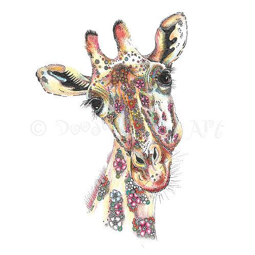 Masai Giraffe [387]