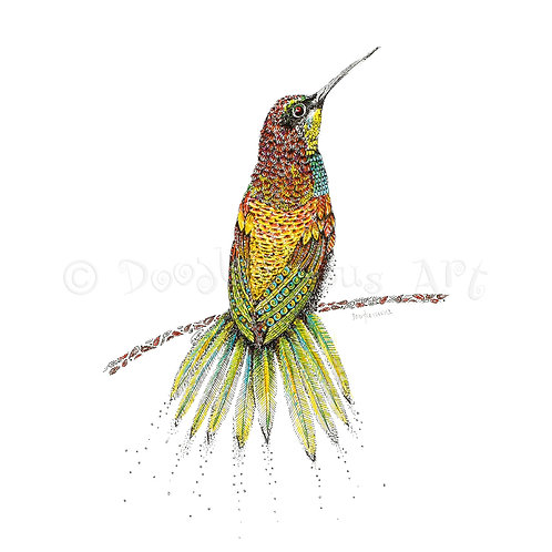 6 x Bee-eater Bird [044]