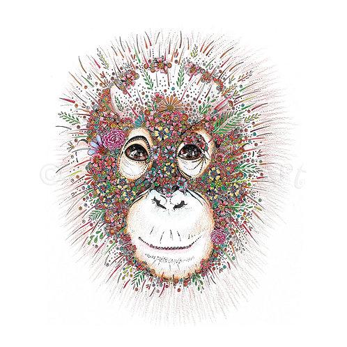 6 x Orangutan [286]