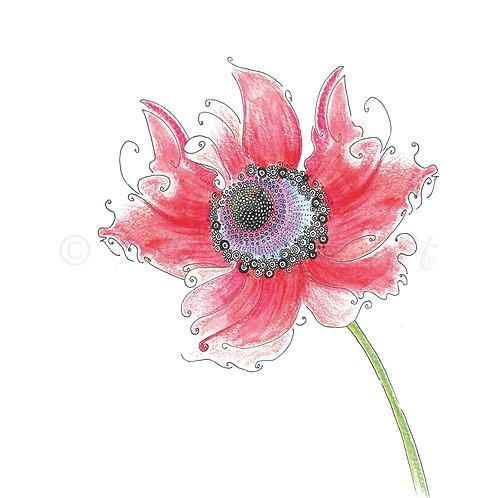 6 x Wild Flower Frilly Poppy [440]