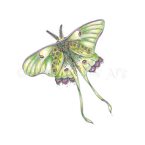 Luna Moth [431]