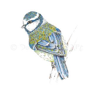 016 Blue Tit.jpg