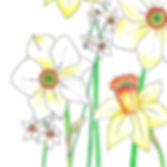 382 Daffodils.jpg